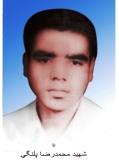 محمدرضا پلنگی